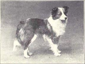 sheltie1915